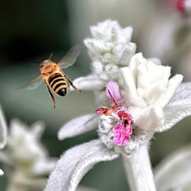 Bee Gone by Donna Kennedy