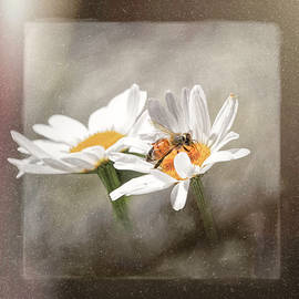 Bee Gone Says the Tiny Spider by Donna Kennedy