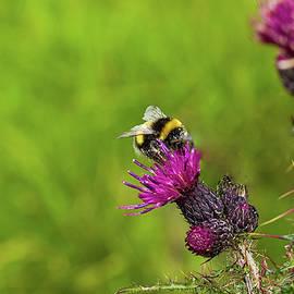 BEE Happy by Watto Photos