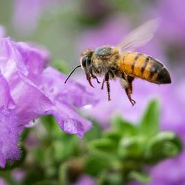Bee in Flight by Bonny Puckett