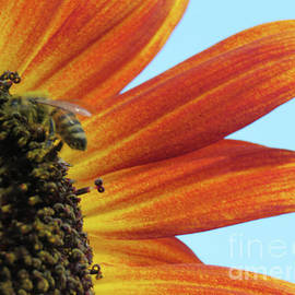 Bee My Sunflower by Mary Mikawoz