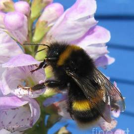 Bee On Memory Flower by Lesley Evered