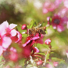 Bee on New Zealand Tea Tree Flowers Impression II by Linda Brody