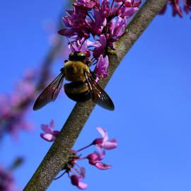 Bee by Pat Turner