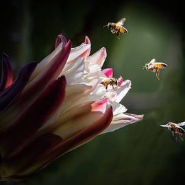 Beeeautiful by Jerry Cowart