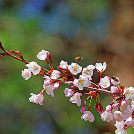 Bees And Blossoms by Debbie Oppermann