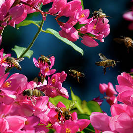 Bees in Pink Flowers by Doug LaRue