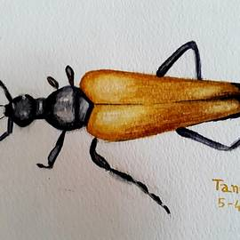 Beetle leptura by Tanuja Rangarao