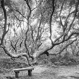 Bench Under a Live Oak Tree - Fort Macon State Park by Bob Decker