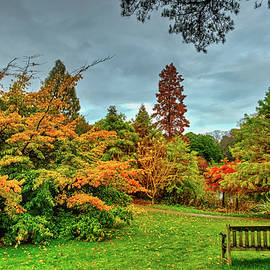 Bench with Autumn Trees by Robert Murray