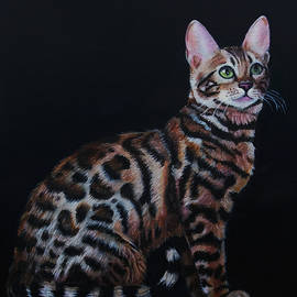 Bengal Cat by Richard Summerfield