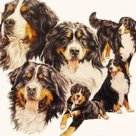 Berner Sennenhund Montage by Barbara Keith