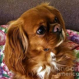 Bernie King Charles Spaniel On A Bed Of Roses by Cara Schingeck