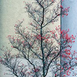 Berries Of Winter by Hugh Warren