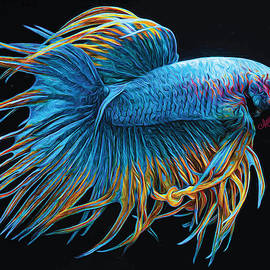 Betta Fish Crowntail, Blue with Gold and Red Highlights by Mariecor Agravante