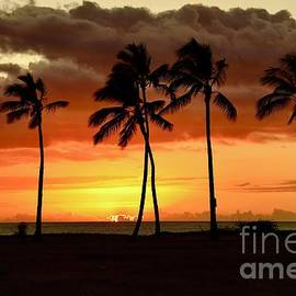 Between the Palms by Craig Wood