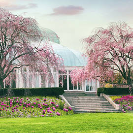 Weeping Cherry in April by Jessica Jenney