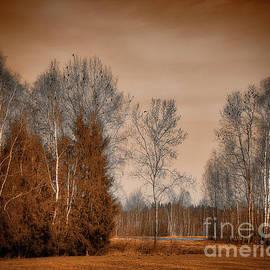 Bichl Moor by Edmund Nagele