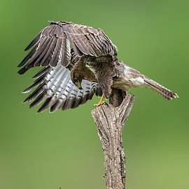 Big Bird by Nicole Wiggerman
