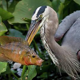 Big Fish 2144 by Matthew Lerman