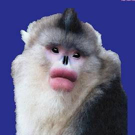 Big Lipped Snubbed-Nose Monkey by Chante Moody