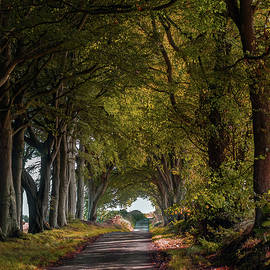 Big Old Beech Tree Avenue by OBT Imaging