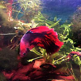 Big Red by Steve Karol