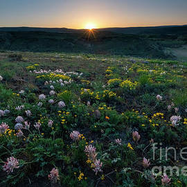 Bighead Clover Sundown by Mike Dawson