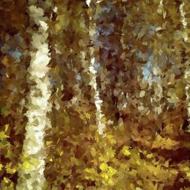 Birch Grove in the Fall by Alex Mir
