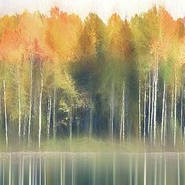 Birch Tree Soft by Terry Davis