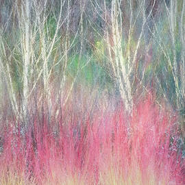 Birch Trees and Dogwood by Terry Davis