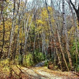 Birch Trees Line the Way, Minnesota by Ann Brown Inspirational
