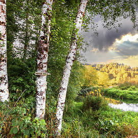 Birch Trees on the Edge of the Marsh by Debra and Dave Vanderlaan