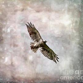 Bird Art - Hawk in Flight by Kerri Farley