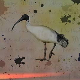 Bird Illustration Ibis by Joan Stratton