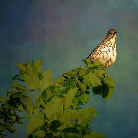 Bird in Mitch Park by John Schultz