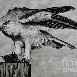 Bird of Prey by Paula Ludovino