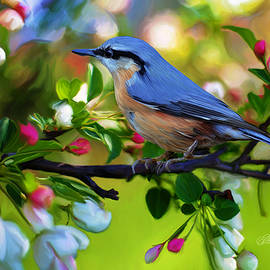 Bird on a branch by Omid Gohardani