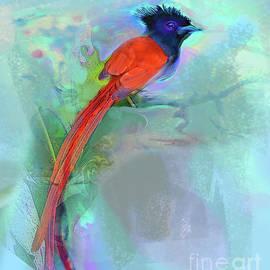 Birds-African Paradise Flycatcher by Zsanan Studio