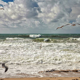 Birds and Waves by MCeyepher Visuals