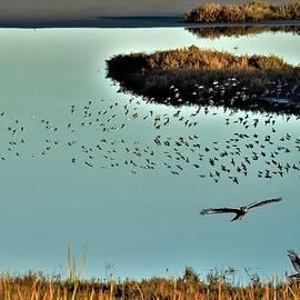 Birds O Prey by John R Williams