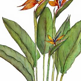 Birds of Paradise Cluster by Barbara Chichester