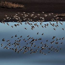 Birds Over Water,  Reflection by John R Williams