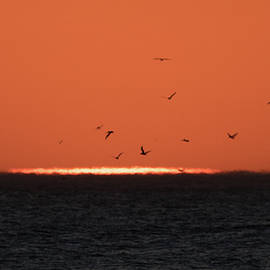 Birds Rescuing the Drowning Sun by Alex Lapidus