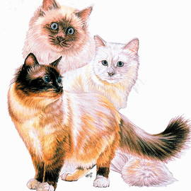 Birman Collage by Barbara Keith