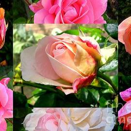 Birth Roses by Lesley Evered