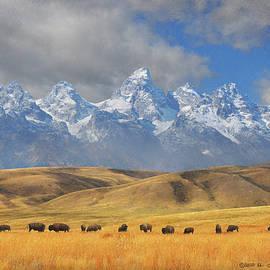Bison Herd Behind Gros Ventre Butte by R christopher Vest