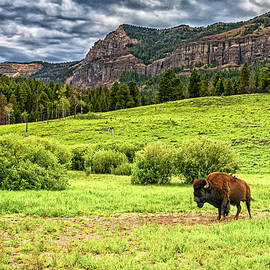 Bison in Yellowstone by Gestalt Imagery