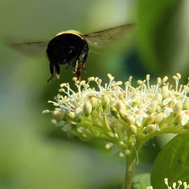 Bizzy Busy Bee by Brian Baker