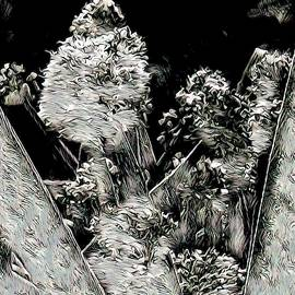 Black And White Abstract Flowering Garlic by Joan Stratton